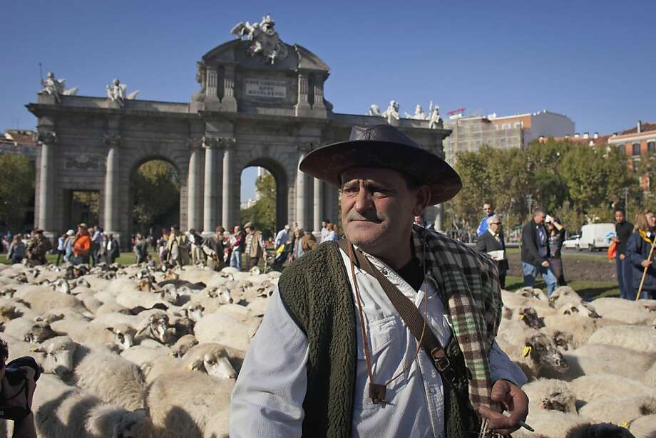 A shepherd leads a flock of sheep along Alcala street during an annual parade in Madrid Sunday Oct. 30, 2011.Spanish shepherds are leading flocks of sheep through the streets of downtown Madrid in defense of ancient grazing, migration and droving rights threatened by urban sprawl and man-made frontiers. Jesus Garzon, president of a shepherds council established in 1273, said some 5,000 sheep and 60 cattle are crossing the city Sunday to exercise the right to droving routes that existed before Madrid grew from a rural hamlet to the great capital it is today. (AP Photo/Arturo Rodriguez) Photo: Arturo Rodriguez, AP