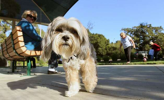 HOT SPOT: Marin Humane Society dog park - SFGate