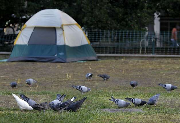 Pigeons have returned to Frank Ogawa Plaza in Oakland, Calif. on Thursday, Oct. 27, 2011 where protesters have already pitched another tent after a police raid dismantled the Occupy Oakland encampment before dawn on Tuesday. Demonstrators have vowed to reoccupy the park. Photo: Paul Chinn, The Chronicle