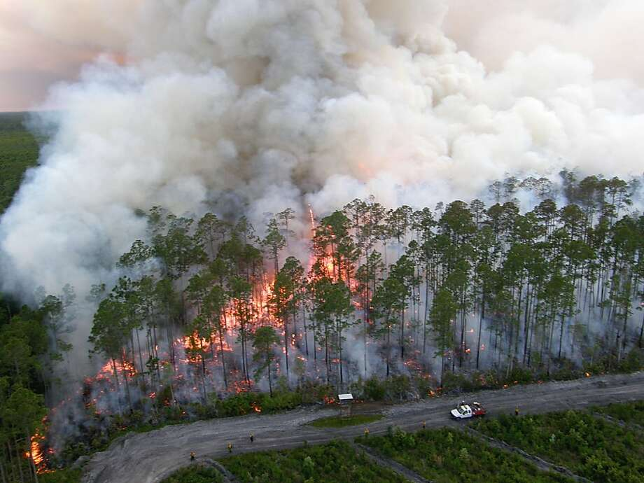 In this June 9, 2011 photo provided by the US Fish and Wildlife Service, the Honey Prairie fire is seen burning in the Okefenokee Swamp in southeast Georgia. A wildfire started by lightning in the Okefenokee Swamp is still smoldering and sputtering six months after it started. (AP Photo/ US Fish and Wildlife Service, Howard McCullough) Ran on: 10-29-2011 A wildfire, ignited by a lightning strike in April, burns  in the Okefenokee Swamp in southeastern Georgia in June. Photo: Howard McCullough, AP