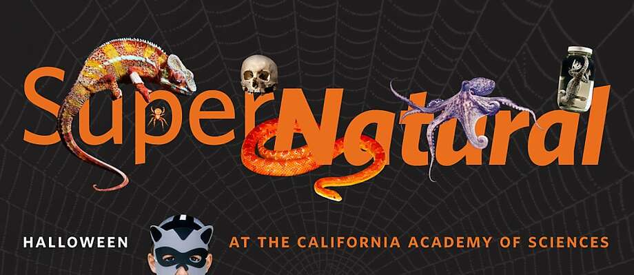 Supernatural is a Halloween event thrown by the California Academy of Sciences. Photo: California Academy Of Sciences