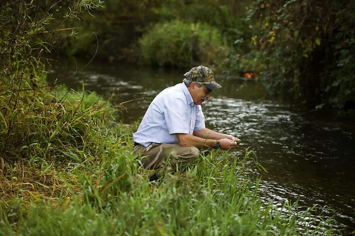 Peter Moyle, a fish biology professor at University of California Davis, looks over salmon spawning areas on Putah Creek in Davis CA., Monday Oct. 24, 2011. The alarming discovery in British Columbia of a contagious virus that has devastated salmon farms on the East Coast, in Europe, Chile and other places has angered conservationists who blame the aquaculture industry, but fishery scientists insist it is too early to panic.
