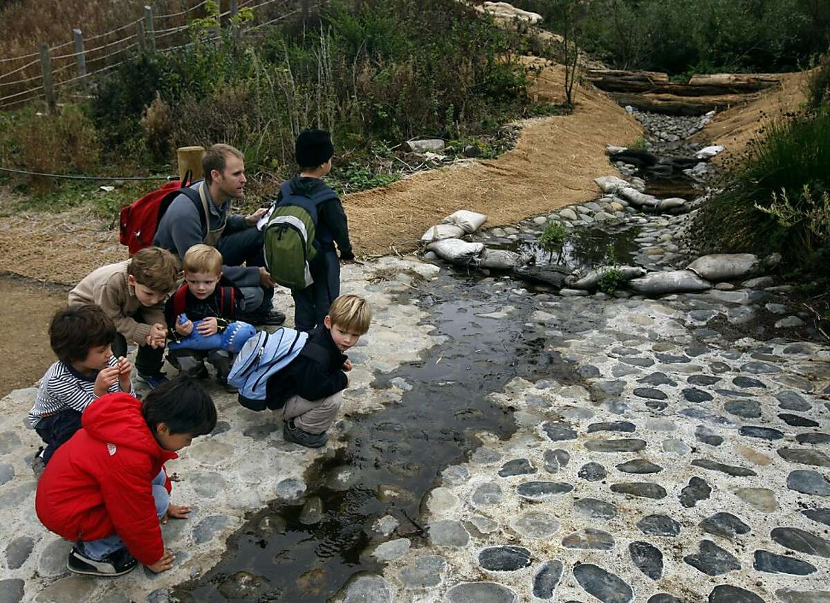Students from the Cow Hollow School follows the path of water flowing into the newly restored El Polin Springs area of the Presidio in San Francisco, Calif. on Thursday, Oct. 20, 2011. The Presidio Trust recently completed a project that