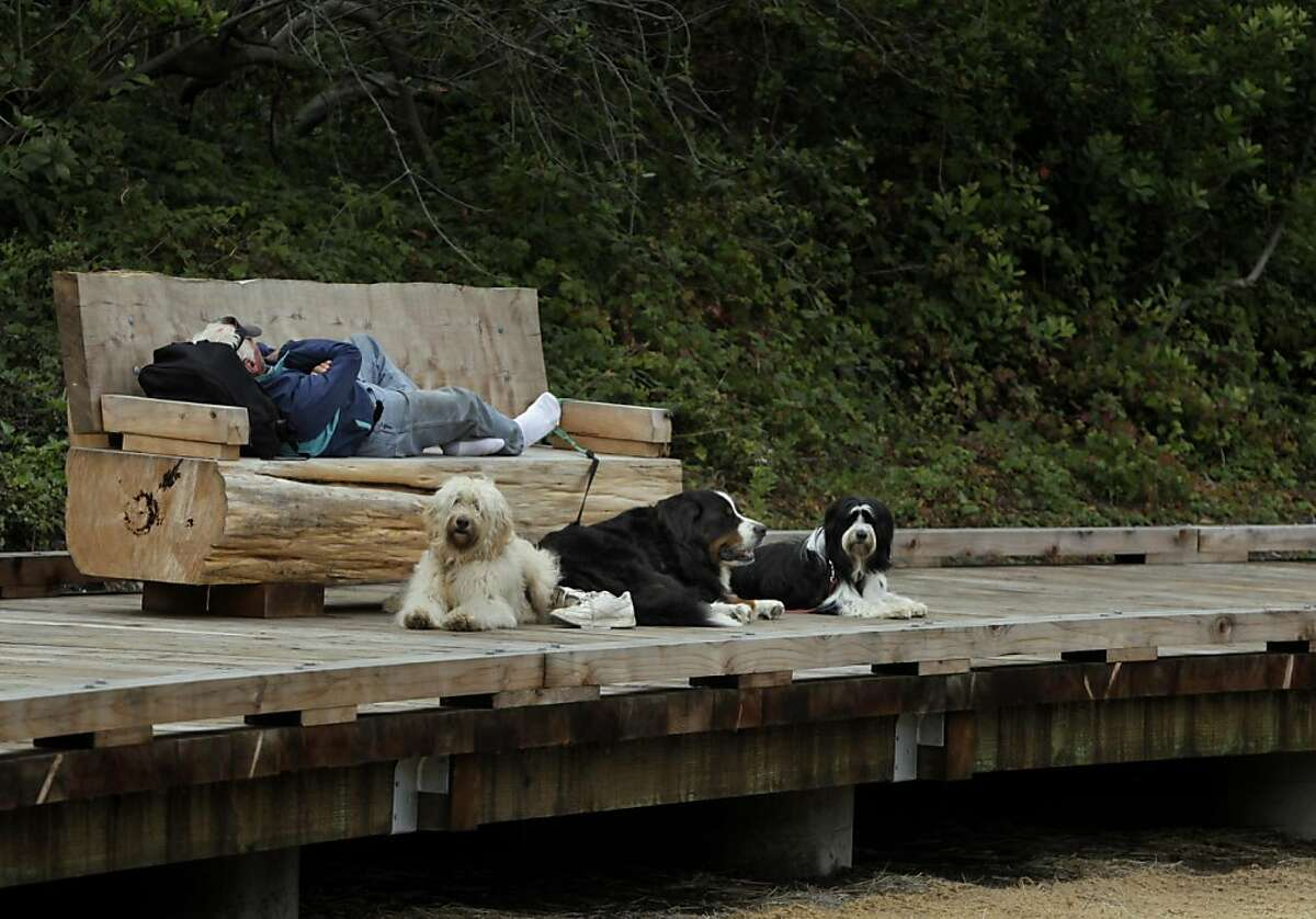 A man takes a nap and his three dogs rest on the boardwalk at the restored El Polin Springs area of the Presidio in San Francisco, Calif. on Thursday, Oct. 20, 2011. The Presidio Trust recently completed a project that