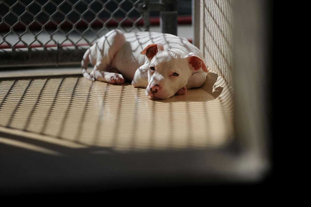2 month old Kemo is seen in his cage at the Alameda Animal Shelter on Tuesday, October 25, 2011. Officials plan to announce the shelter is closing later in the day.