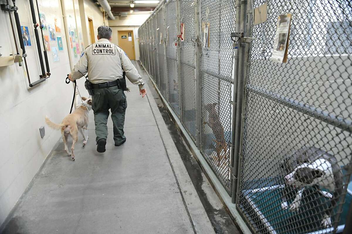 Animal Control Supervisor Diana M Barrett walks Tia back to her cage after a being photographed at the Alameda Animal Shelter on Tuesday, October 25, 2011. Officials plan to announce the shelter is closing later in the day.