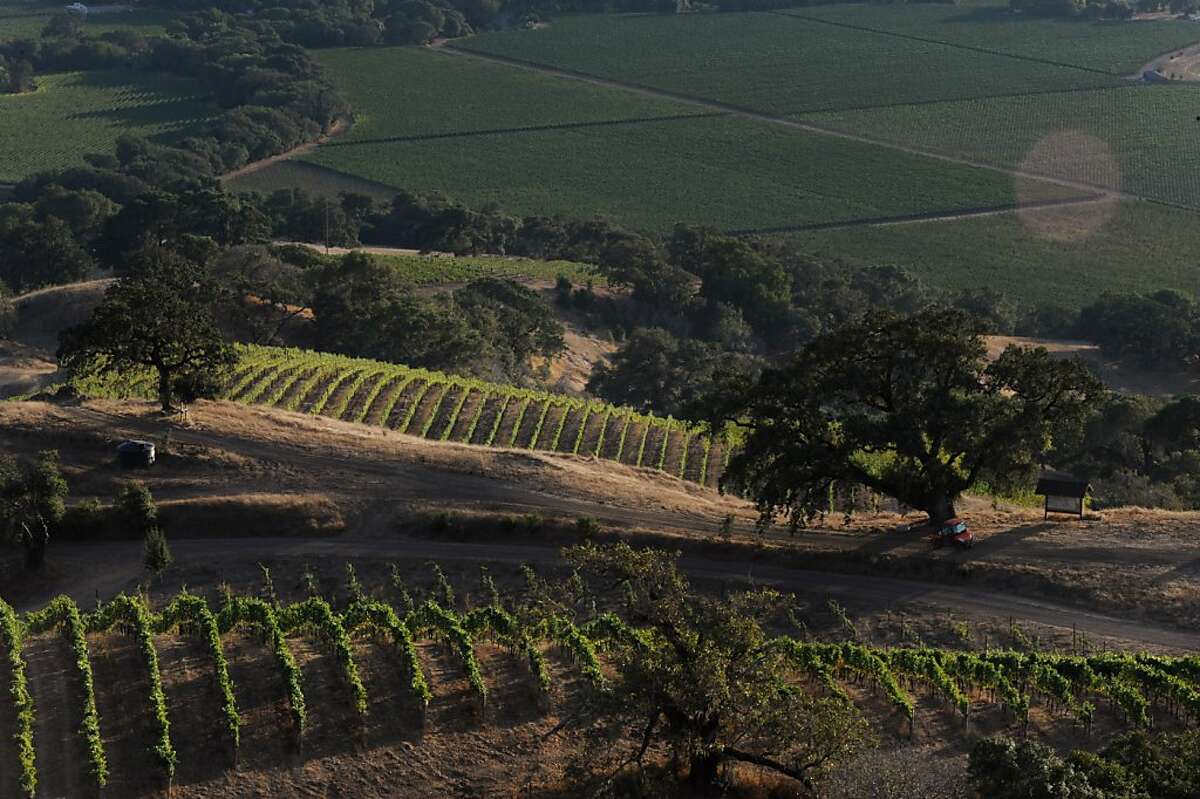 The 38-acre Cerise vineyard at Knez Winery in Boonville, California in the Anderson Valley. September 29, 2011.