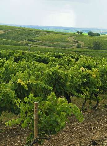 Cognac grape vineyards, as far as the eye can see. Photo: Bill Fink, Special To The Chronicle