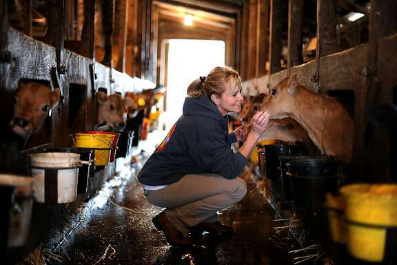 Karen Bianchi-Moreda with her 2-week-old Jersey calfs at Valley Ford Cheese Co. in Valley Ford, California. October 10, 2011.