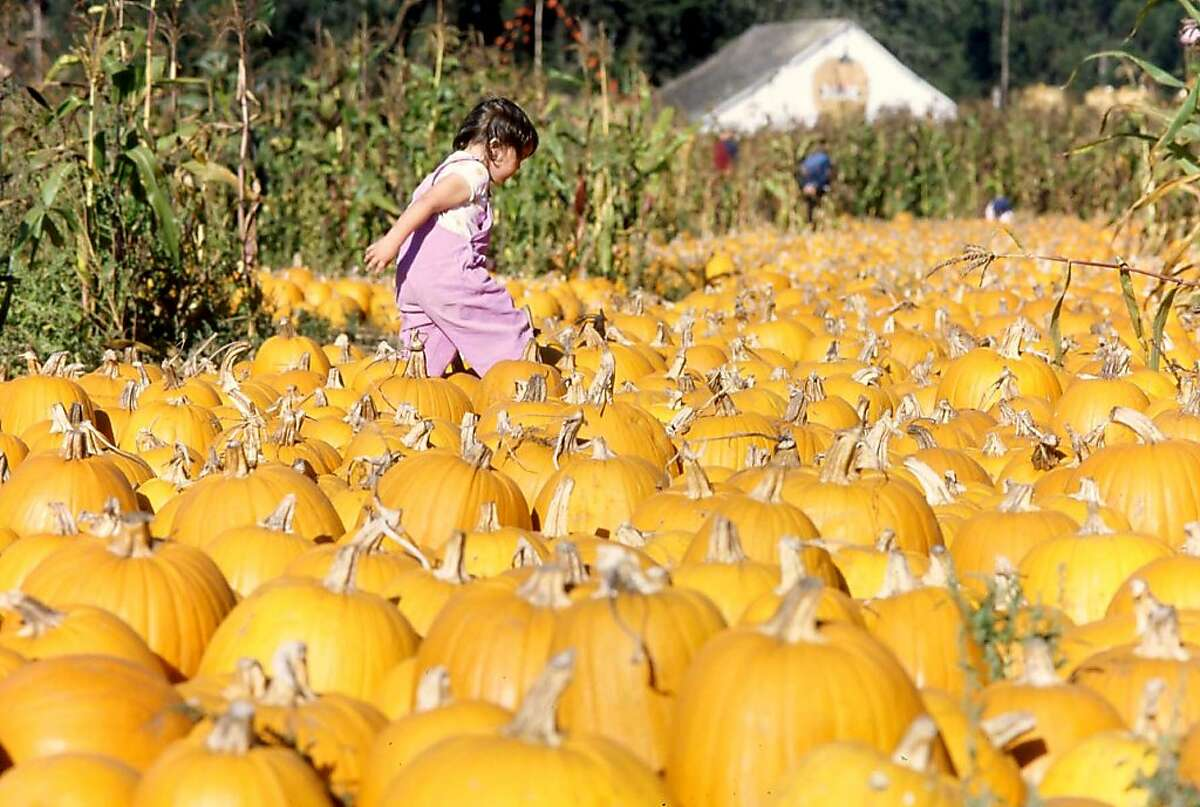 Half Moon Bay boasts many pumpkin patches and celebrates the gourd every October at the Half Moon Bay Art & Pumpkin Festival.