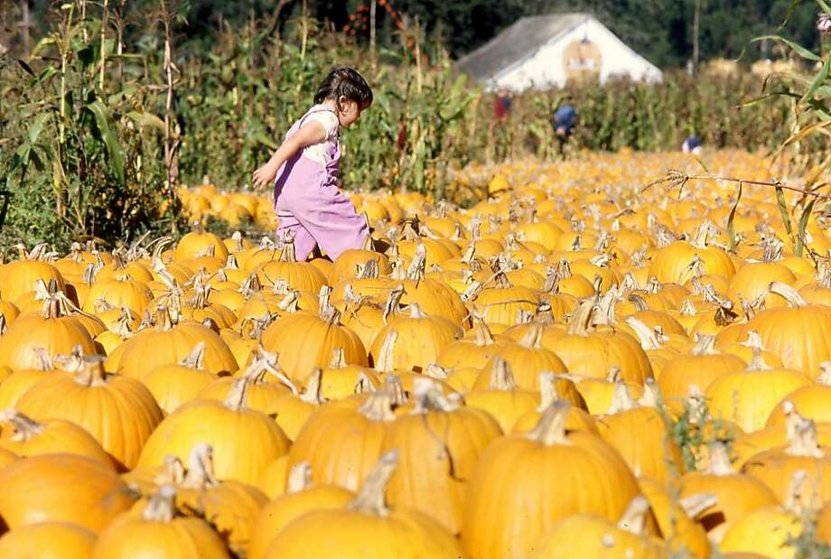 Half Moon Bay boasts many pumpkin patches and celebrates the gourd every October at the Half Moon Bay Art & Pumpkin Festival. Photo: Visit Half Moon Bay