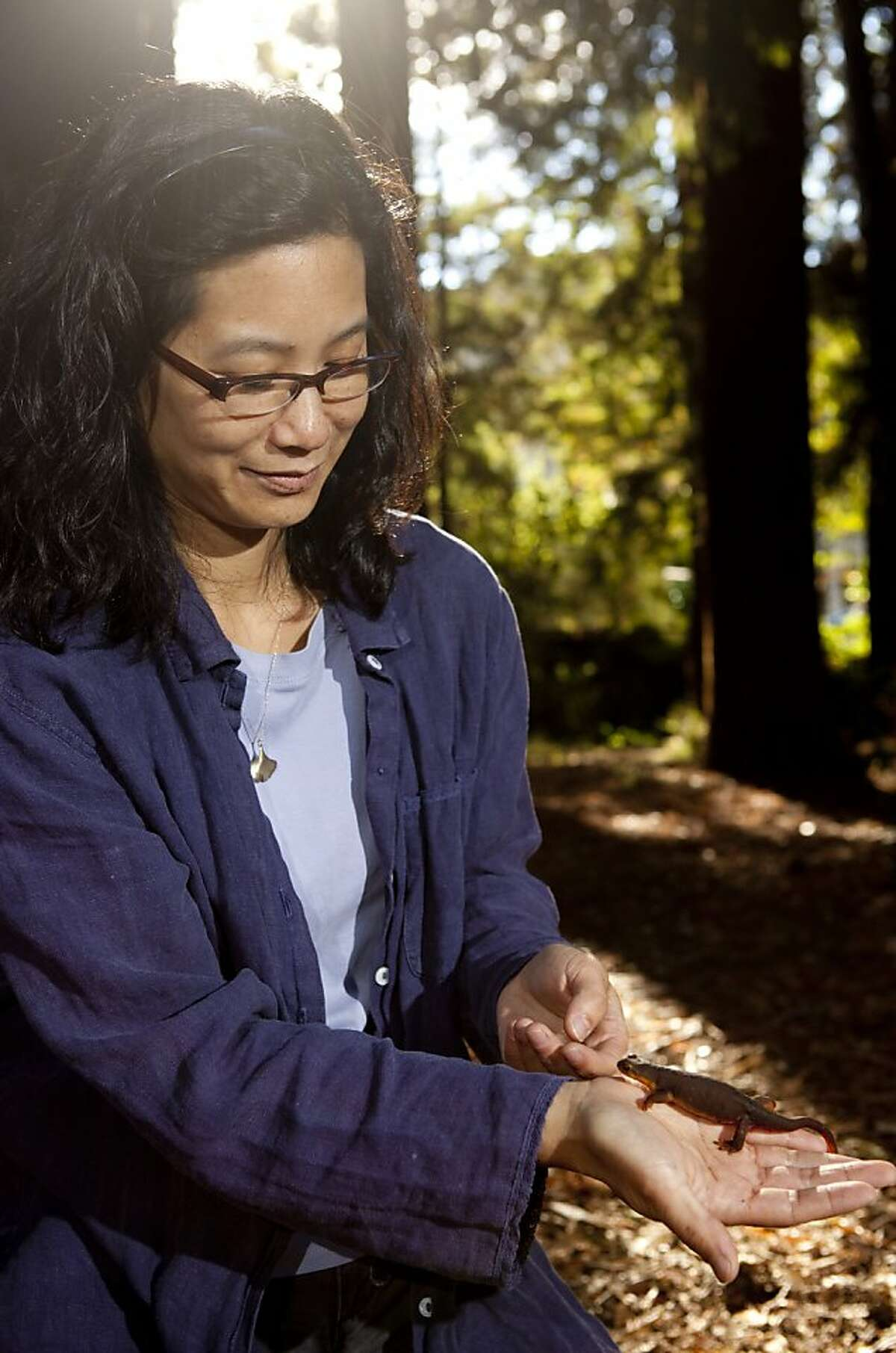 Michelle Koo, UC Berkeley research scientist on the Amphibia Web Team at the Museum of Vertebrae Zoology, poses with a California Newt on Thursday, September 26, 2011 in Berkeley, Calif. Koo is part of the Global Amphibian and Reptile Bioblitzes which is powered by iNaturalist.org.