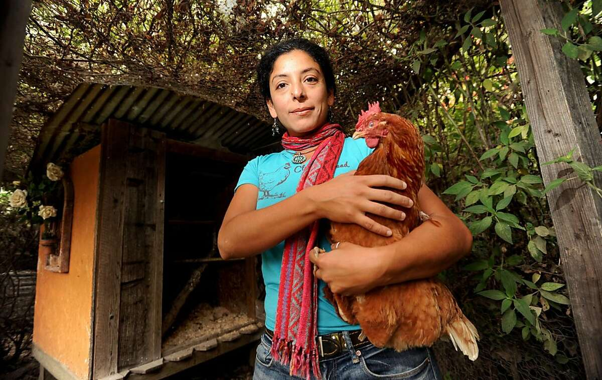 Esperanza Pallana, owner of Pluck & Feather Farm and co-founder of the East Bay Urban Agriculture Alliance, holds one of the chickens she raised in the backyard of her Oakland, Calif., home on Monday, Oct. 3, 2011.