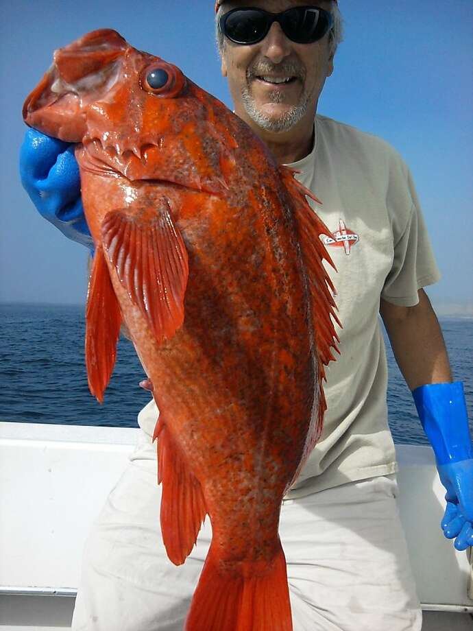 Doug Laughlin caught this big vermillion rockfish on a reef 80 feet deep just off San Gregorio. Photo: Tom Stienstra/The Chronicle