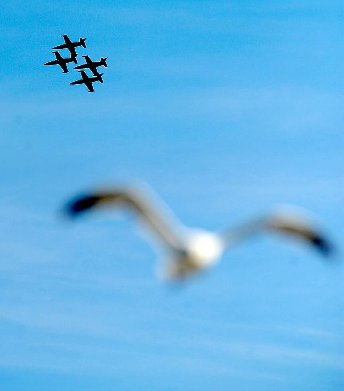 The Blue Angels fly pass a seagull on Saturday, Oct. 9, 2010, in San Francisco.