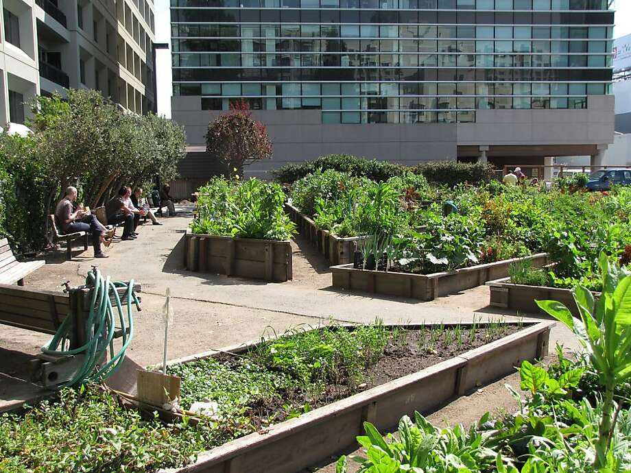 The Alice Street Community Gardens opened in 1985 inside a warren of blocks just south of Moscone Convention Center. Today, its 240 plots attract gardeners from nearby elderly housing -- and nearby workers drawn to the tranquil scene. Photo: John King