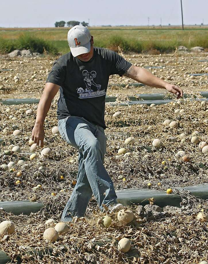Owner Eric Jensen kicks a cantaloupe as he walks through a field of it on the Jensen Farms near Holly, Colo., on Wednesday, Sept. 28, 2011. The Food and Drug Administration has recalled 300,000 cases of cantaloupe grown on the Jensen Farms after connecting it with a listeria outbreak. Officials said Wednesday more illnesses and possibly more deaths may be linked to the outbreak of listeria in coming weeks.  (AP Photo/Ed Andrieski) Photo: Ed Andrieski, AP