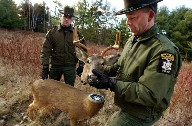 "Conservation officer Michael Arp, right, removes the head of ""Robodeer,"" a robotic stuffed deer used to by New York State DEC to catch poachers, on Tuesday, Dec. 14, 2005, at Five Rivers Environmental Center in Bethlehem, N.Y. Standing nearby is Conservation officer Walter Maloney. (Times Union archive/ Cindy Schultz) Photo: CINDY SCHULTZ / ALBANY TIMES UNION"