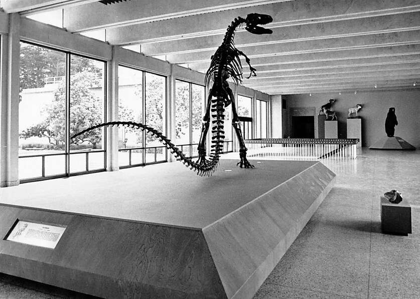 A dinosaur was on display at the old Academy of Sciences, in the interior of Cowell Hall. May 13, 19