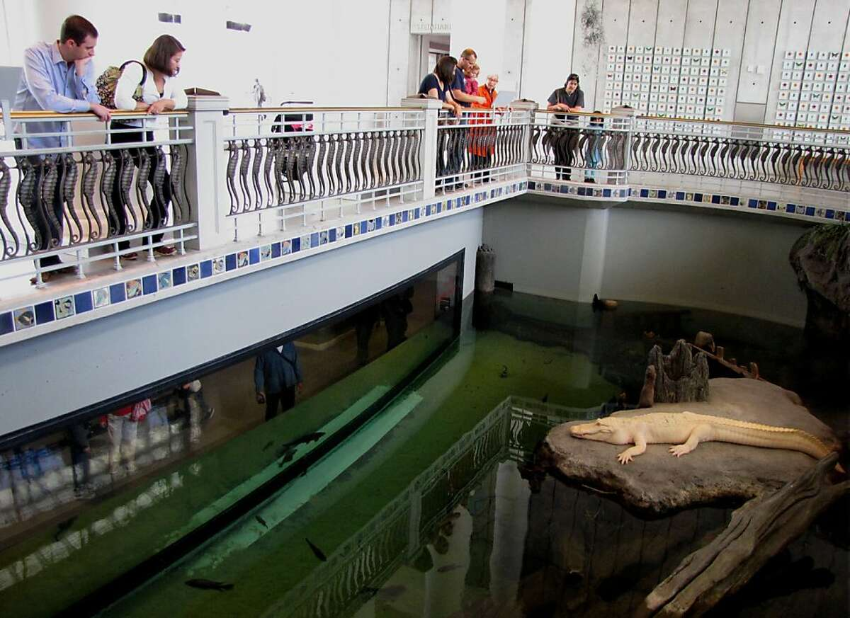 Site: California Academy of Sciences, Music Concourse Drive Location: The Swamp