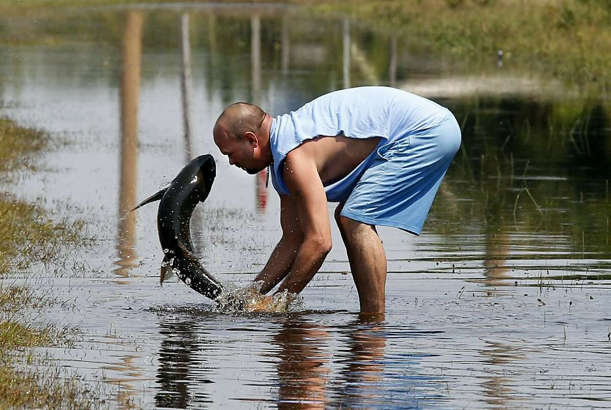 Greg Austin of Avon, N.C. tries to save a large fish that was washed out of a local pond during the storm surge from Hurricane Irene, in Avon, N.C., Monday, Aug. 29, 2011. Avon is one of the Hatteras Island communities cut off due to breaches in N.C. Highway 12 caused by Hurricane Irene. (AP Photo/The News & Observer, Chuck Liddy)
