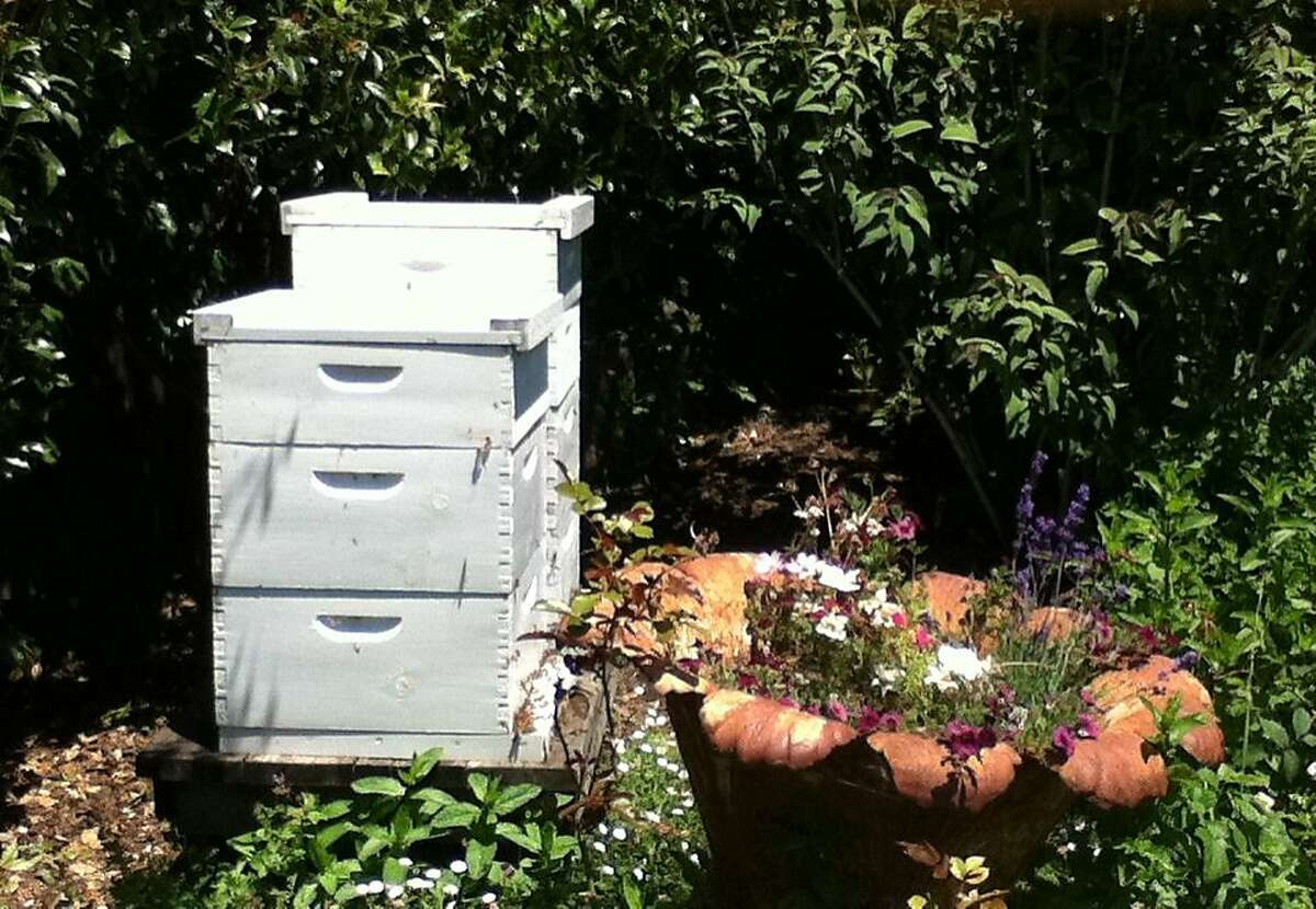 Bee hives sit in the backyard of Laurie Stern uses propolis produced by bees in to make her Honey Perfume.