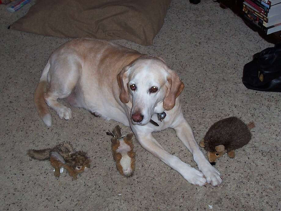 Lab-hound mix Buddy was more than just a hound dog - SFGate
