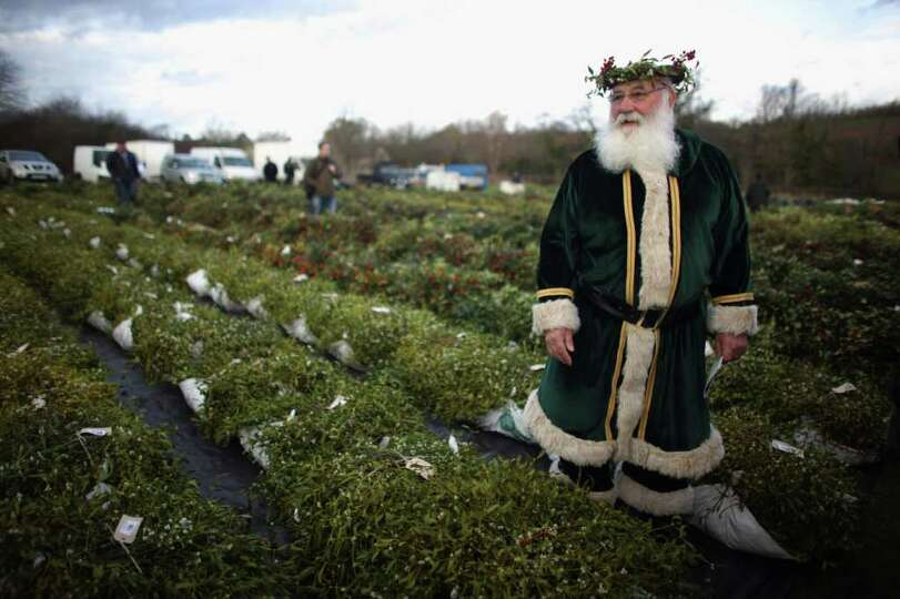 Green Santa, Michael Pritchard, wearing a crown of mistletoe and holly, walks among this year's crop