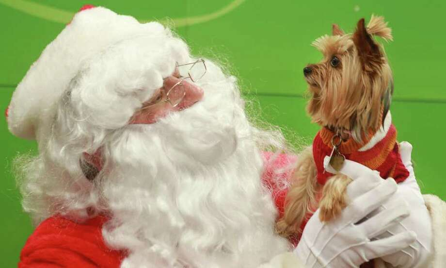 """Lexie"" owned by Ashley Calabrese, poses with a man dressed as Santa Claus during a photo op Saturday afternoon, Dec. 3, 2011 at the Pet Smart in Franklin Square in Franklin Blvd in Gastonia, North Carolina. Photo: Mike Hensdill, Associated Press / AP"