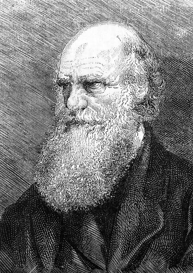 "TO GO WITH THE STORY IN FRENCH BY BORIS CAMBRELENG: "" BICENTENAIRE DE CHARLES DARWIN, FONDATEUR DE LA BIOLOGIE MODERNE"" - This undated engraving released on February 10, 1959 showing English naturalist Charles Darwin ( 1809-1882), father of the theory of evolution meaning that all species of life have evolved over time from common ancestors through the process he called natural selection. AFP PHOTO  (Photo credit should read -/AFP/Getty Images) Ran on: 02-10-2009 Photo: AFP/Getty Images"