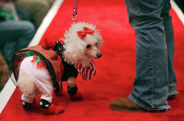 "Kristy Torralva and ""Fysty"" take part in the Struttin' Pets Holiday Event Christmas Couture Contest presented by North Star Mall with the San Antonio Humane Society Monday Dec. 5, 2011 at the mall. The St. Nick pet pictures with Santa will be held Monday Dec. 12 from 6-9 p.m. at the mall costumes will be provided. Visti sahumane.org for more information.  Photo: EDWARD A. ORNELAS, SAN ANTONIO EXPRESS-NEWS / © SAN ANTONIO EXPRESS-NEWS (NFS)"