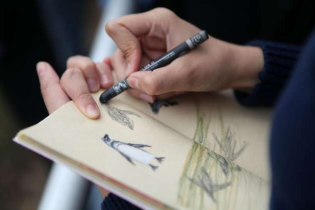 Diana Toledano of Spain takes out her sketch book to draw some of the penguins during feeding time at the San Francisco Zoo on Saturday. Photo: Audrey Whitmeyer-Weathers, The Chronicle