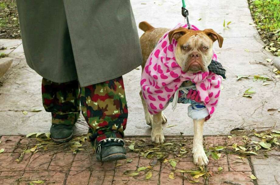 Pet owners dress their dogs in embarrassing, and sometimes unnecessary, outfits to keep warm. Photo: AP