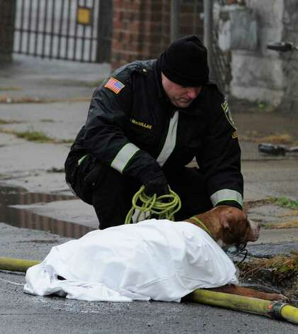 Mohawk Ambulance member John MacMillan administers oxygen to a dog that was overcome during a smokey blaze at the 2 Fuller Street Apartments in Schenectady, N.Y. Dec. 6, 2011.  (Skip Dickstein / Times Union) Photo: SKIP DICKSTEIN / 2011
