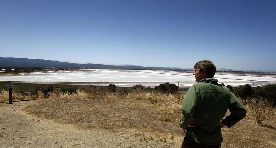 Stephen Knight from Save The Bay looks out at salt ponds from Bedwell Bayfront Park owned by Cargill who is now proposing to build 12,000 new homes on the salt ponds in Redwood City. Tuesday July 26, 2011. Photo: Lance Iversen, The Chronicle