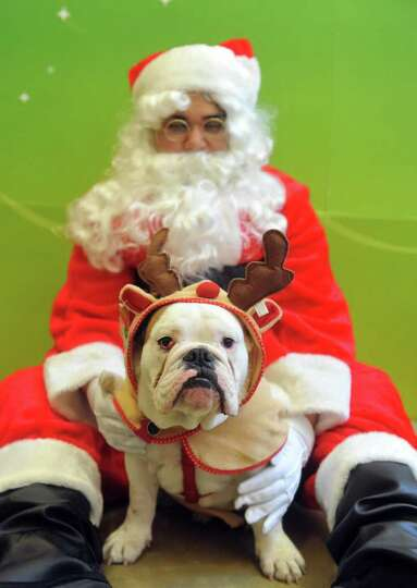 Gus, an English Bulldog, gets a photo with Santa at PetSmart's annual Santa Claws event in New York.