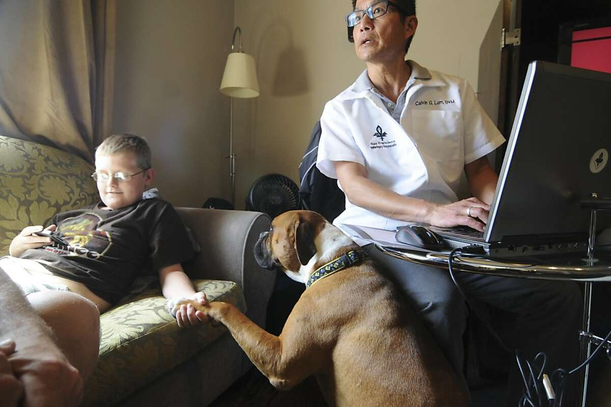 Dr. Calvin Lum makes a housecall on Tuesday, July 19, to the Steinhart Hotel and Apartments in San Francisco, to perform a first exam for Marcus Ross's recently rescued boxer, Miles, while Marcus's son David Ross (left), age 11, plays a videogame. Miles was adopted by Ross on Sunday, July 17, while he was in the city working on Billy Elliot (Ross normally lives in Las Vegas). Dr. Lum has also done housecalls for Ross's other boxer, Carly, who was adopted in 2007. Dr. Lum runs his practice, San Francisco Veterinarian Housecalls, out of his childhood home in San Francisco.