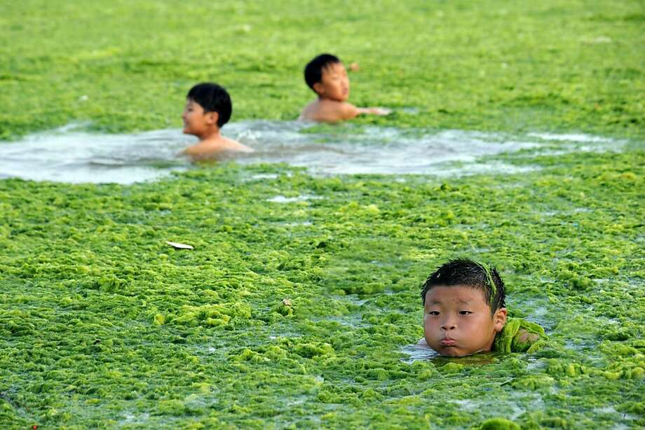 Chinese children swim along the algae-filled coastline of Qingdao, in eastern China's Shandong province on July 17, 2011. Green algae continues to spread in waters off China's east coastline and although not poisonous, it can hinder the fishing industry and tourism in affected areas.    CHINA OUT Photo: Str, AFP/Getty Images