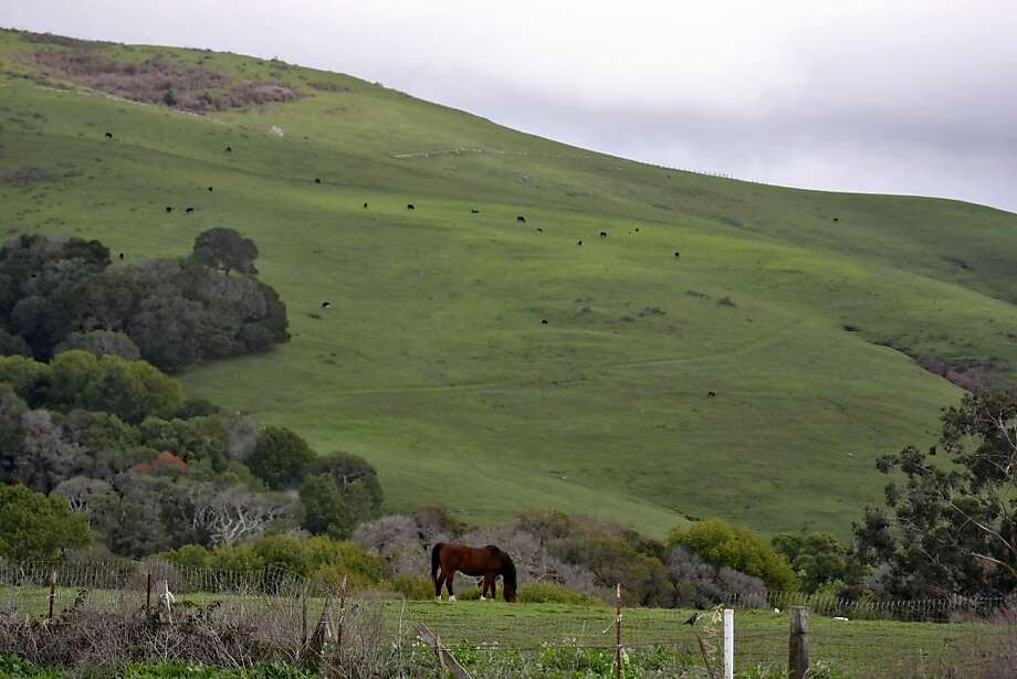 Horses graze among the undulating hills along State Route One, in Point Reyes Station, Calif. Thursday Feb. 5, 2009. Photo: Lacy Atkins, The Chronicle