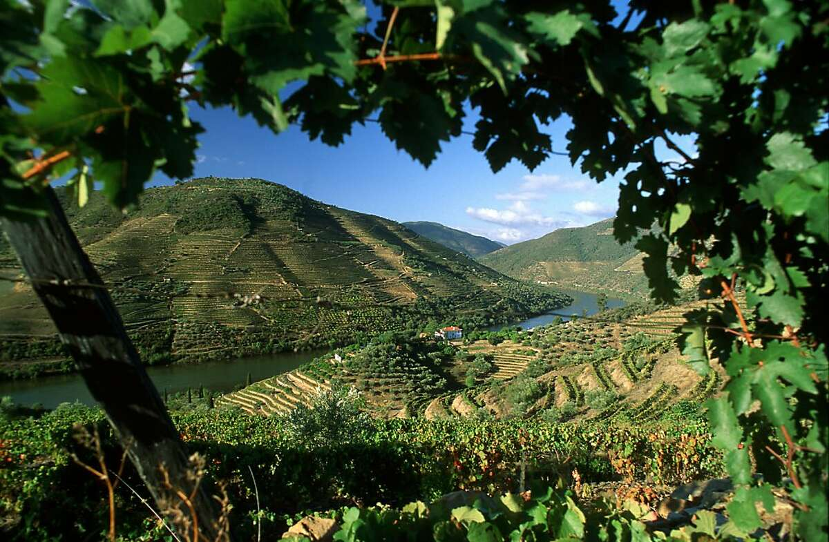 Vineyards above the Douro river in Portugal, the source not only of Port but also an increasing number of excellent dry red wines.
