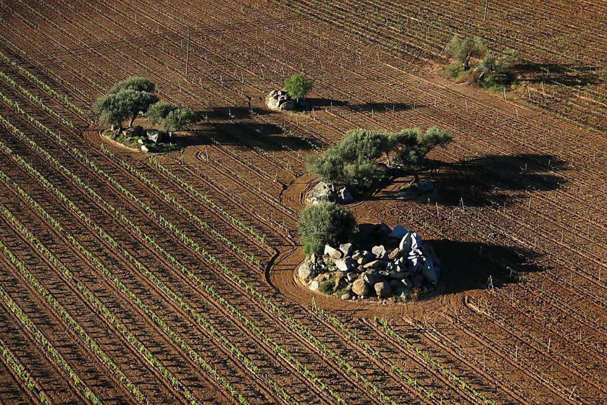 Vineyards wrap around the landscape in the Reguengos de Monsaraz area of Portugal's Alentejo region.