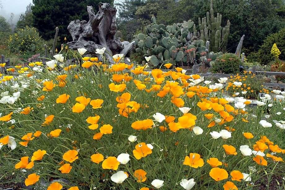 Mendocino Coast Botanical Garden Photo: Christine Delsol