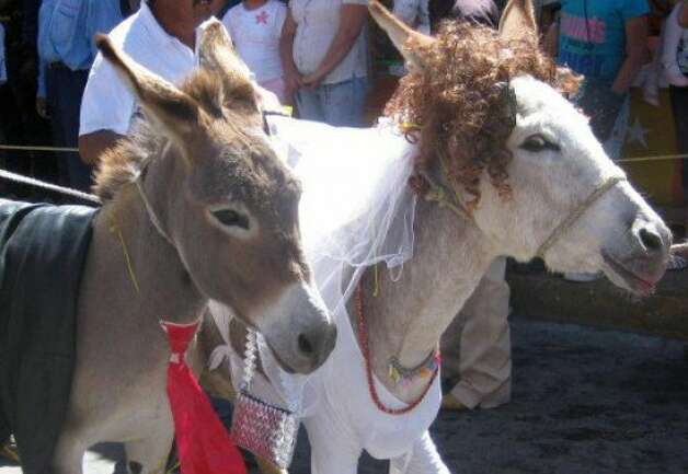 Happily-wedded burros. I just liked the expression on the face of the right burro. But maybe that's just the effect of her wig & lipstick. Yes, that's right: lipstick. Photo: Julie Carmann