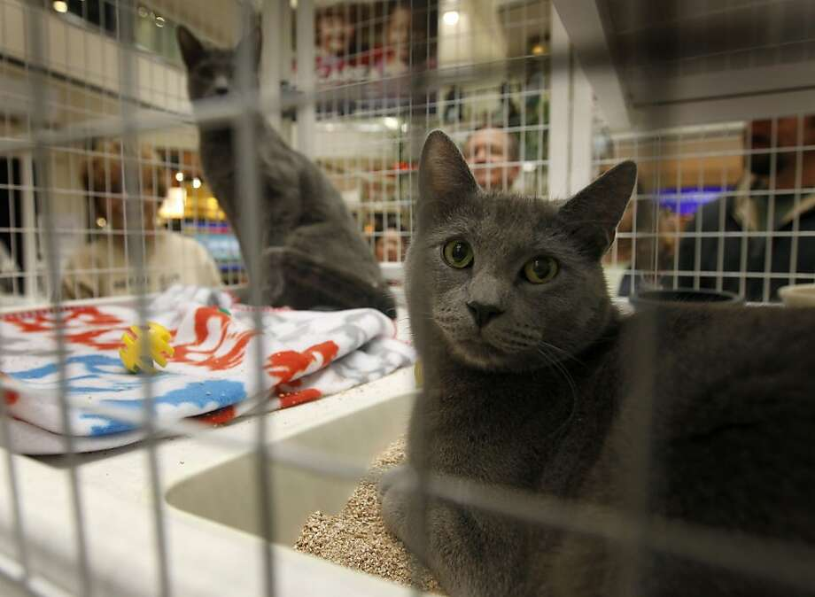 Two cats wait to be adopted at the Matchmaker Adoptathon for homeless cats and dogs at Stoneridge Mall in Pleasanton on Saturday. Photo: Paul Chinn, The Chronicle