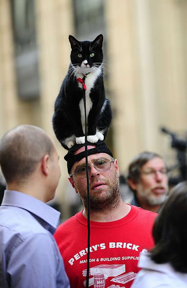 A passerby carries his cat over his head while walking past the building where former IMF head Dominique Strauss-Khan is held under house arrest after posting bail, in New York, May 25, 2011.   TOPSHOTS / AFP PHOTO / Emmanuel DUNAND (Photo credit should read EMMANUEL DUNAND/AFP/Getty Images) Photo: Emmanuel Dunand, AFP / Getty Images