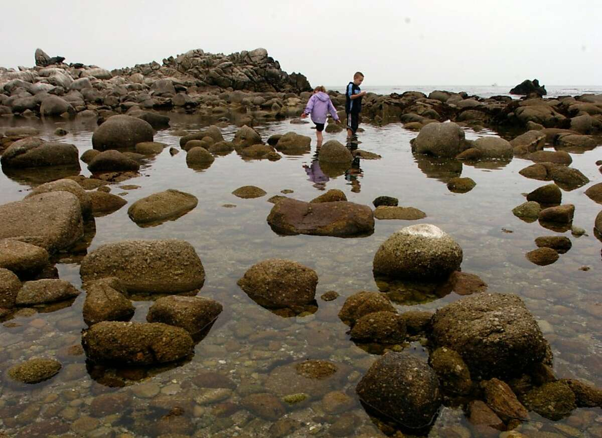 A rocky outcrop popular with tide-poolers in Pacific Grove.