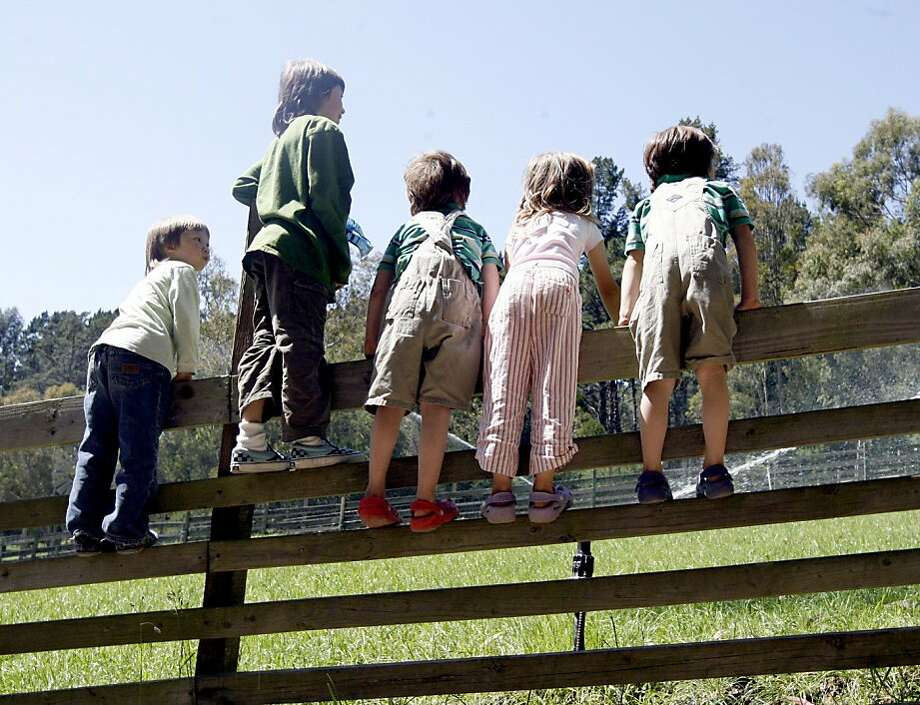 Children from El Cerrito climb the pasture fence hoping the spray from the irrigation sprinklers will cool them off, at Tilden Little Farm in Tilden Park, a great, free place for kids, in Berkeley, Calif.  on Thursday May 22, 2008. Katy Raddatz / The San Francisco Chronicle Photo: Katy Raddatz, SFC