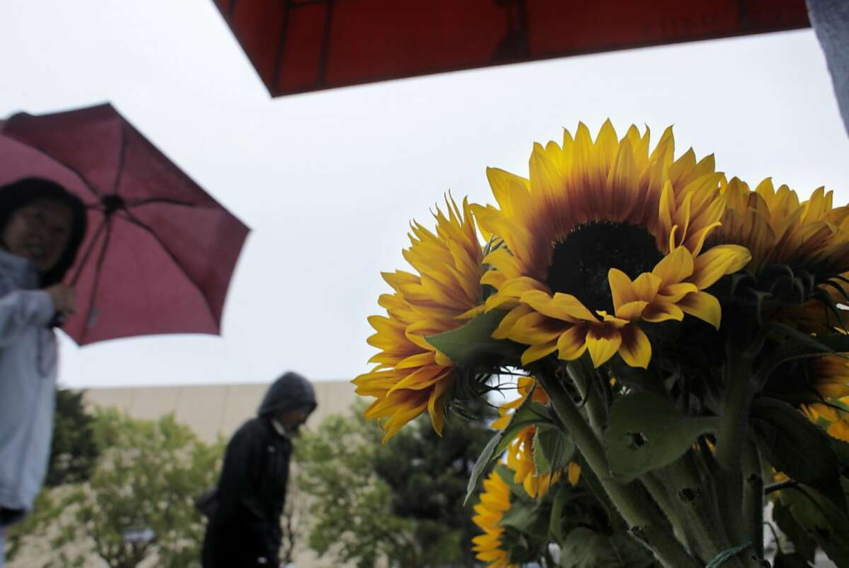 People scurry down past sunflowers at Monica's Florist trying to take cover from the summer rain storm, Tuesday June 28, 2011, in San Francisco, Calif.