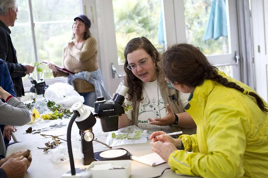 Alison Stewart (center) works to help Andrea Veltman (right) figure out what is wrong with her ailing plants during the sick plant clinic at UC Botanical Garden at Berkeley in Berkeley, Calif., on Saturday, June 4, 2011. Photo: Laura Morton, Special To The Chronicle