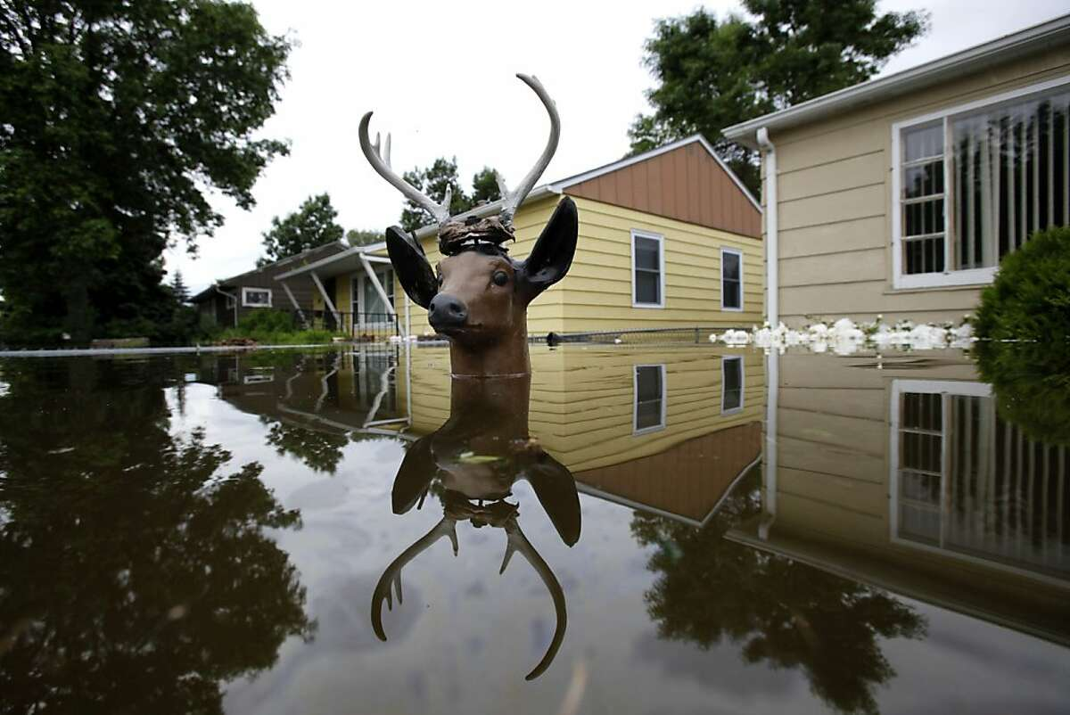 The head of a lawn deer remains above the flood waters from the Souris River in an evacuated western neighborhood of Minot, N.D. Friday, June 24, 2011. About one-fourth of the city's 40,000 residents have evacuated their homes.